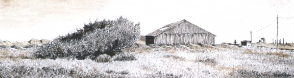 sea buckthorn and shed